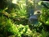 aquarium-2008.jpg